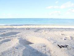 沖縄旅行の安い時期は?ベストシーズンはいつ?