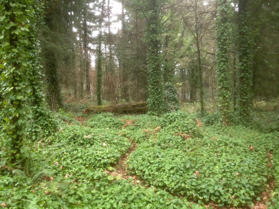 Ivy Kills Trees