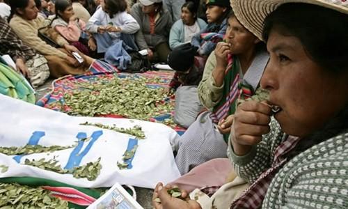 Ojo de agua: despenalización de la hoja de coca