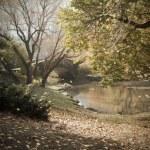 Central Park 193992, WAM Partners