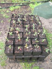 Potted on.