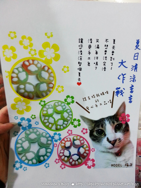 20140614華山貓咪送養_103548