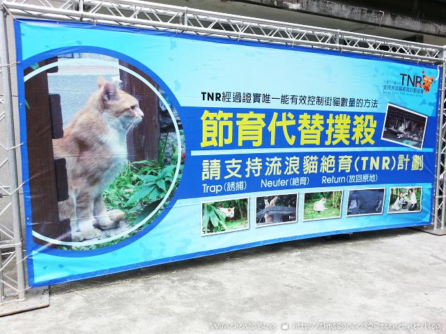 20140614華山貓咪送養_100518