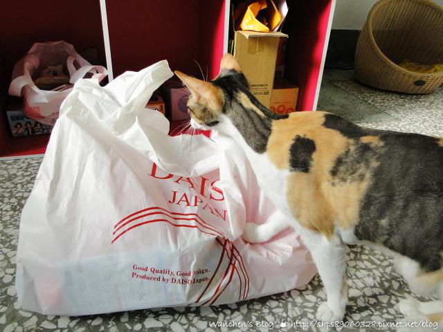 大創寵物必買篇 寵物用品