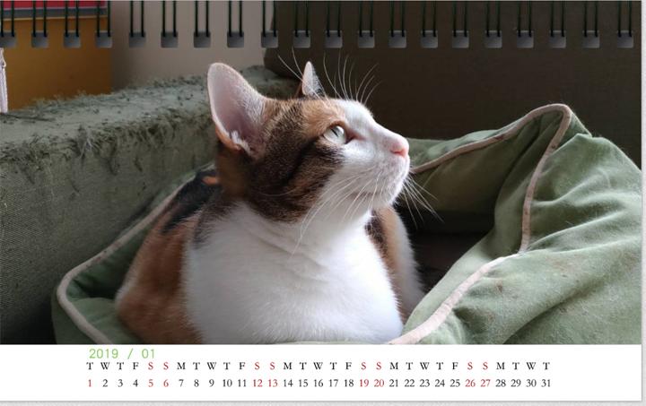 2019-3cats-calendar-201901
