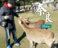 日本旅遊 奈良