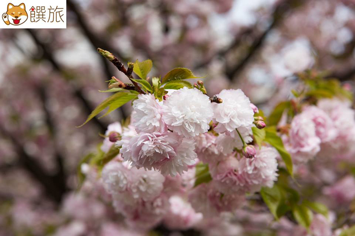 日本美食旅遊情報