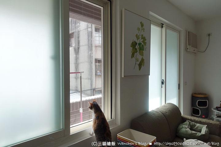 防貓跳樓安全網