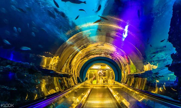 537-aquarium-sleepover-kenting