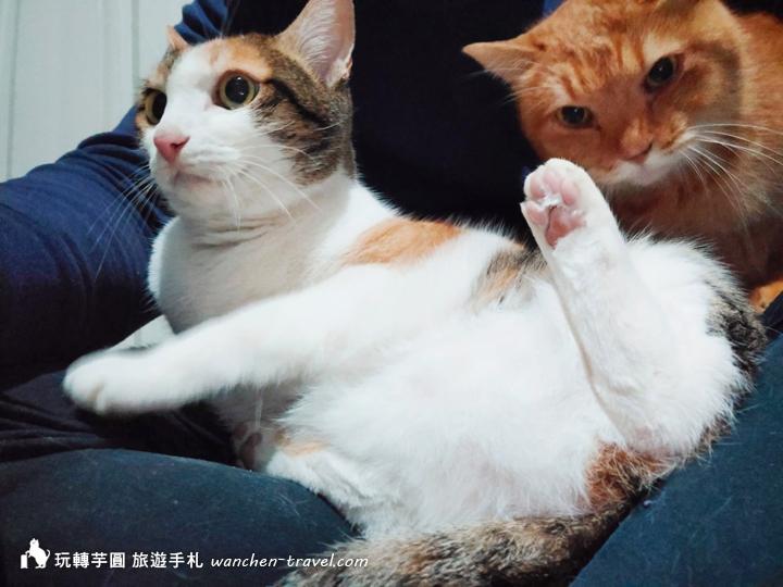cat-(10)