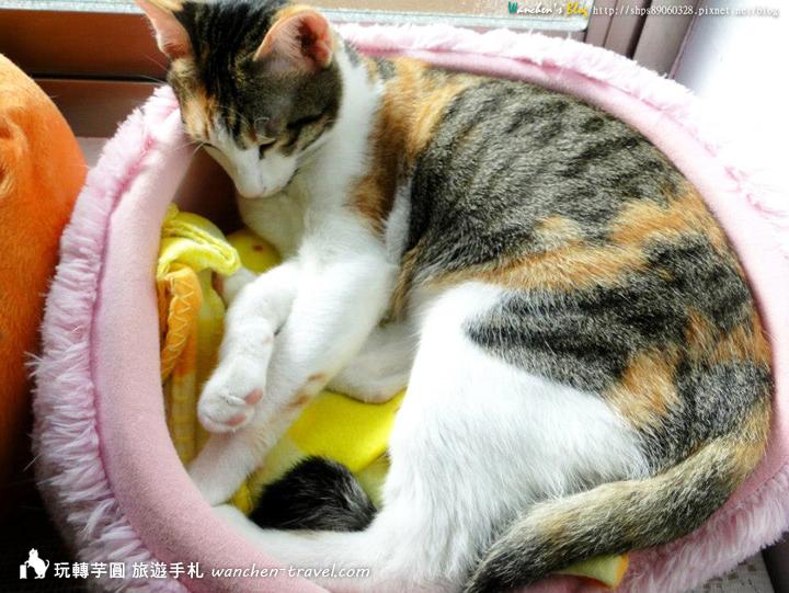 cat-(13)