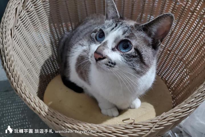 cat-(3)