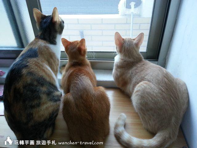 cat-(4)