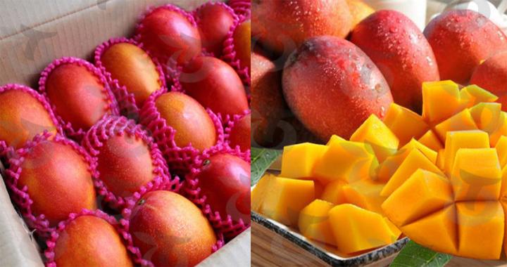 tainan-mango-gift-box-202007-02