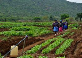 Women farmers in their allotment