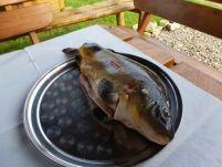 Freshly caught carp.
