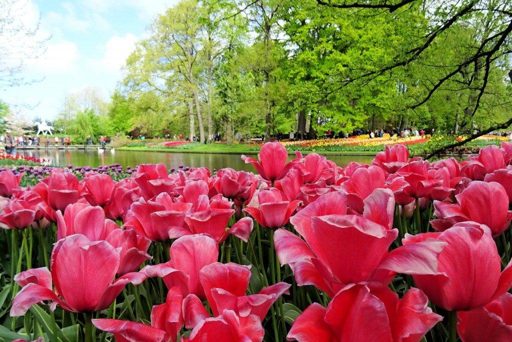 Keukenhof Lisse Nederland tulpen april