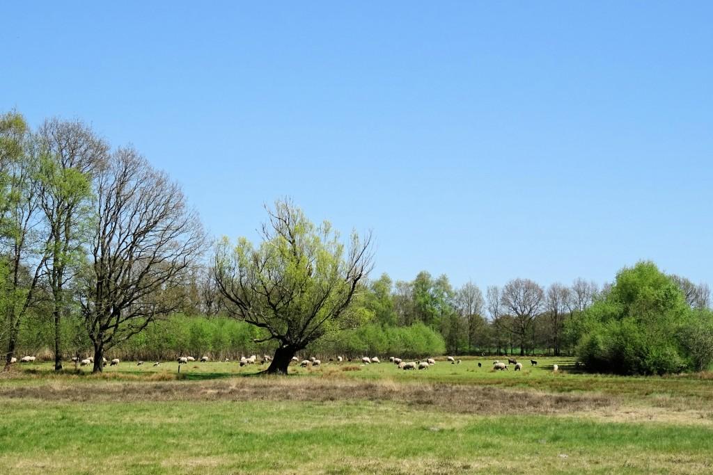 Orvelte Drenthe april