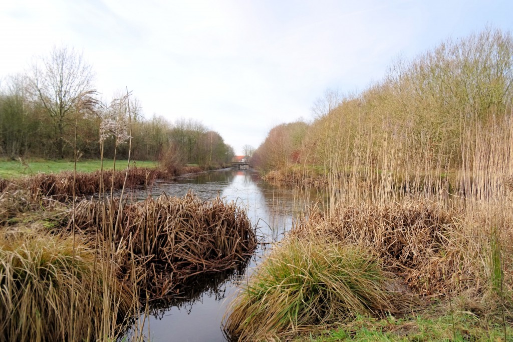 Borgerswold Veendam Project Gezonder Leven