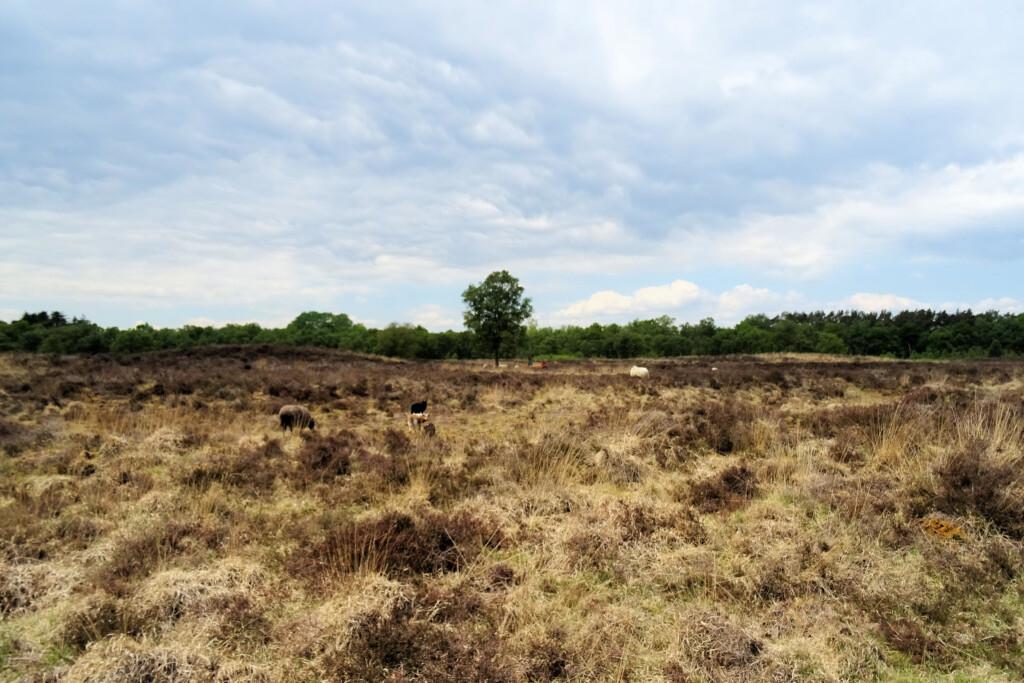 Gasterse Duinen Drenthe wandelroute