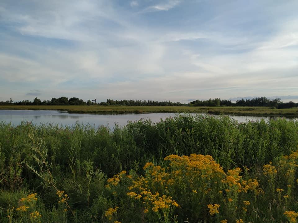 Leinwijk Kropswolde juli 2020
