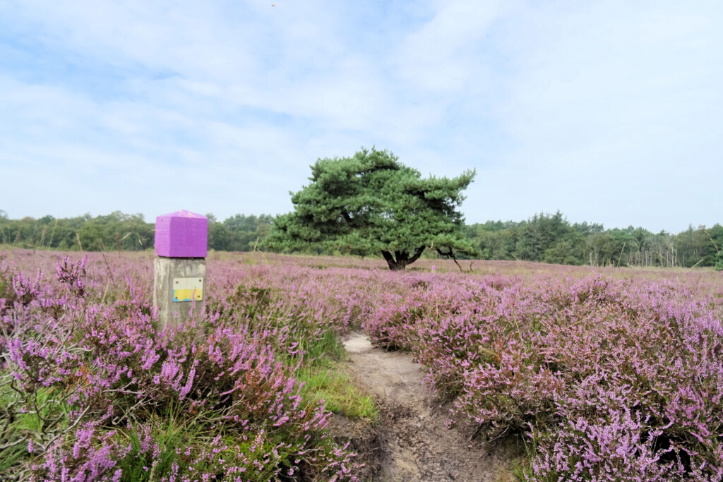 Gasterse Duinen paarse route