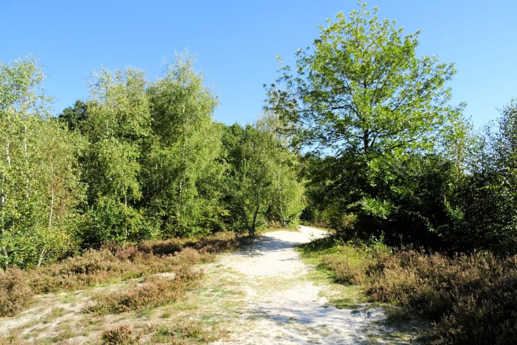 bomen De Heemtuin Muntendam