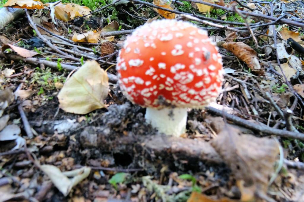 paddenstoelen De Heemtuin Muntendam