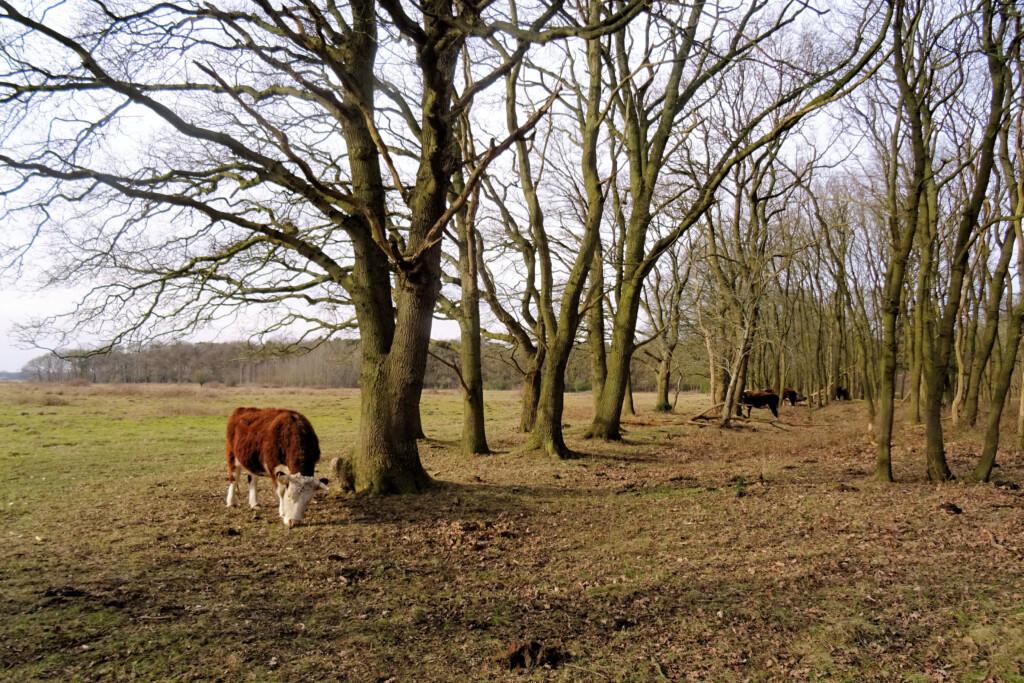 Noordlaarderbos Groningen wandelen