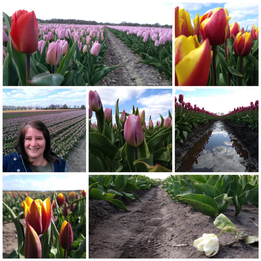 tulpenvelden april