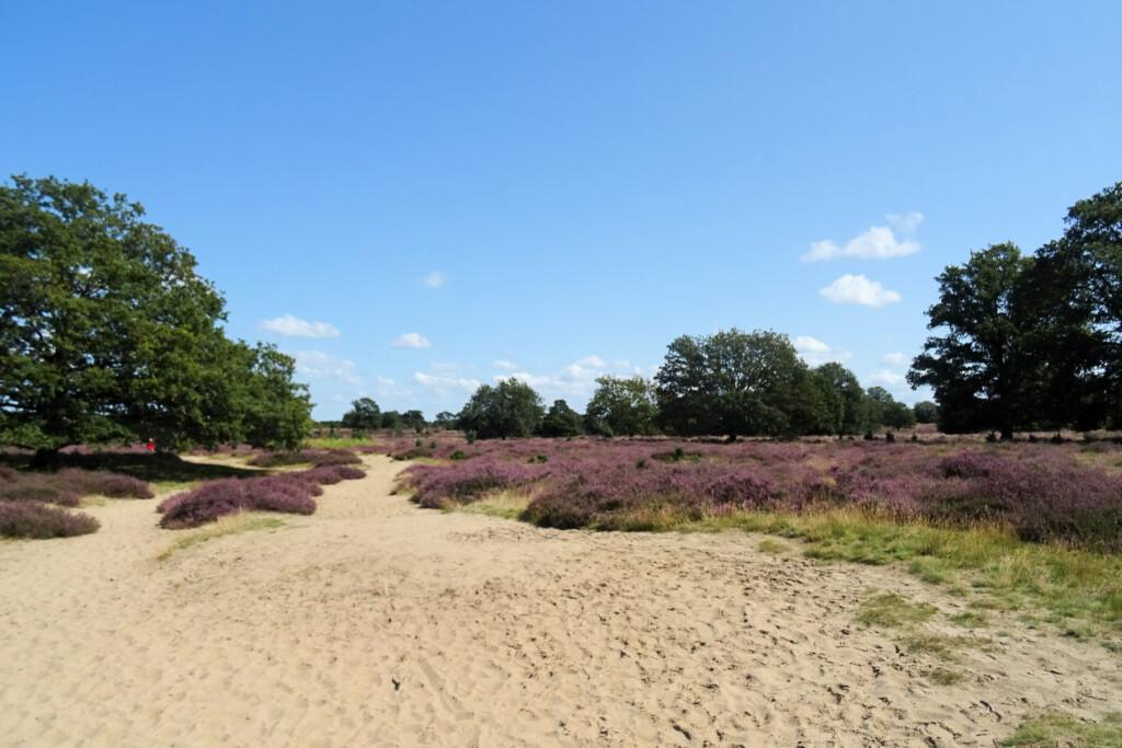 Natuurgebied Drouwenerzand Drenthe