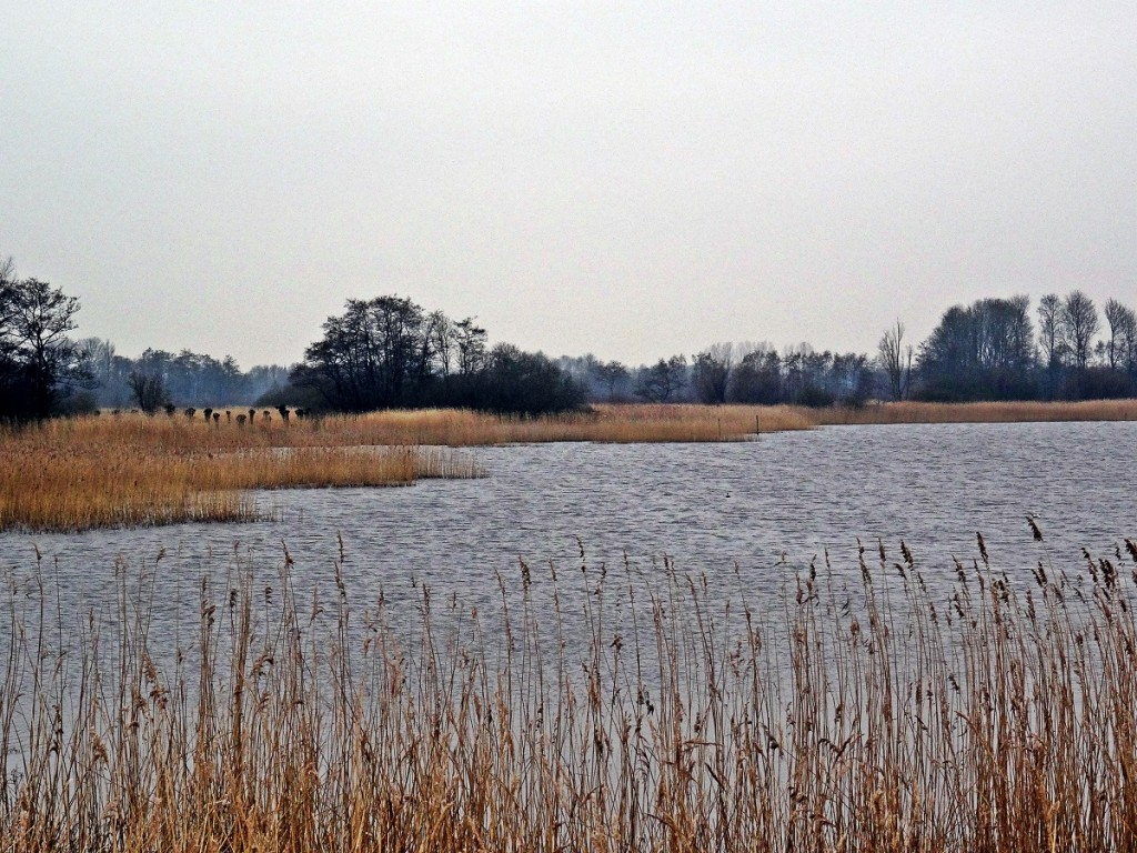 Wandeling van Friesland 02