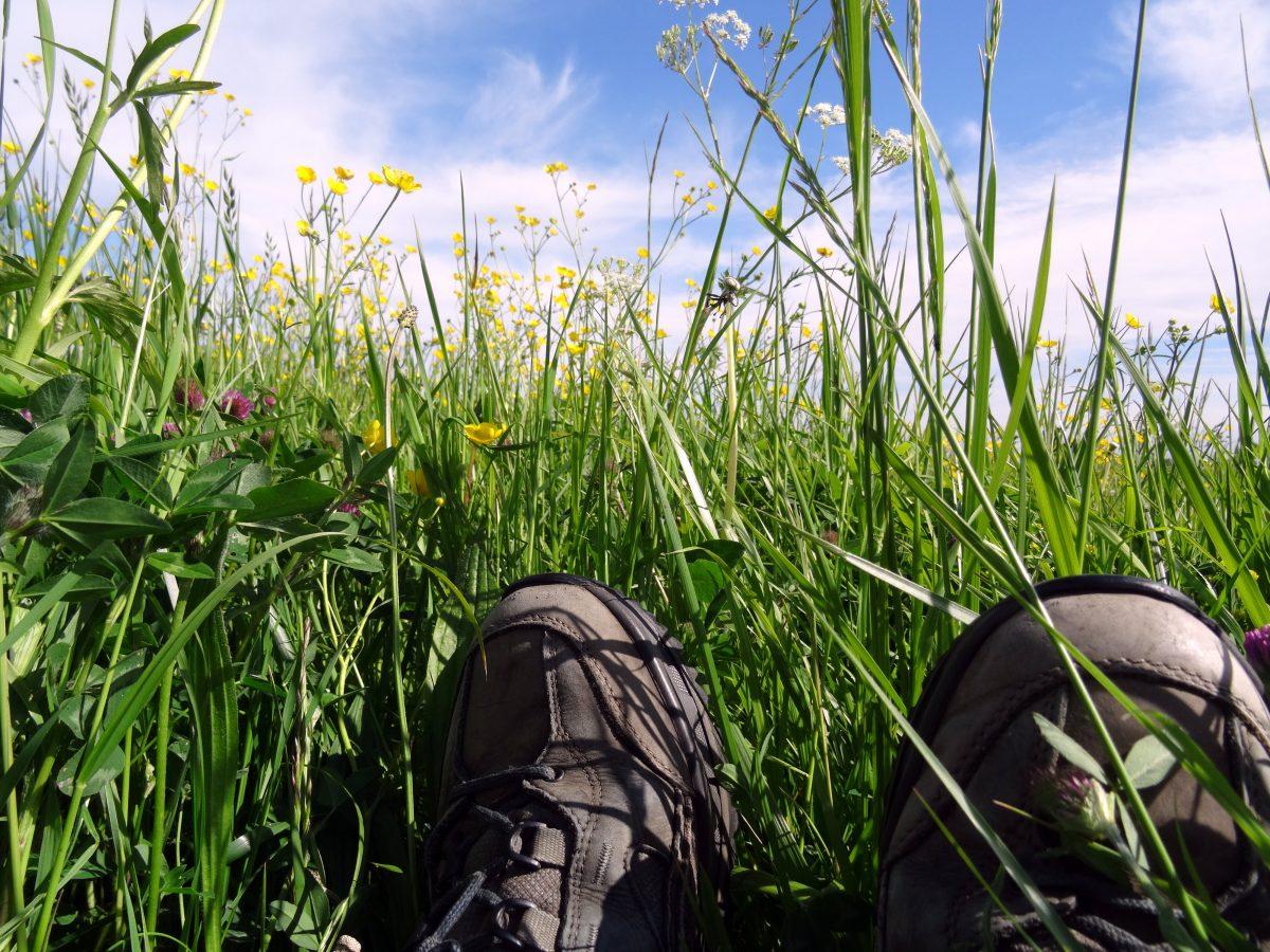 Wandelschoenen in het gras