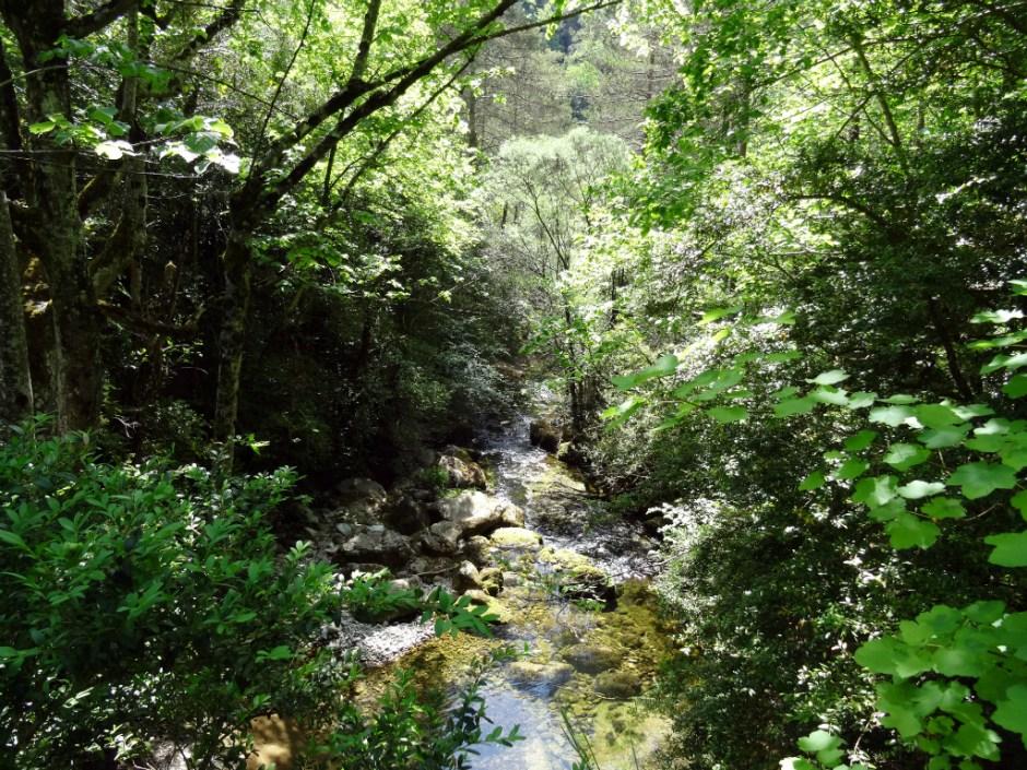 Kabbelend riviertje