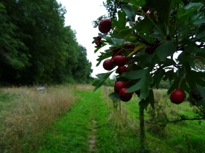 wandelen langs Savelsbos - d'n Driej Gronsveld Rijckholt