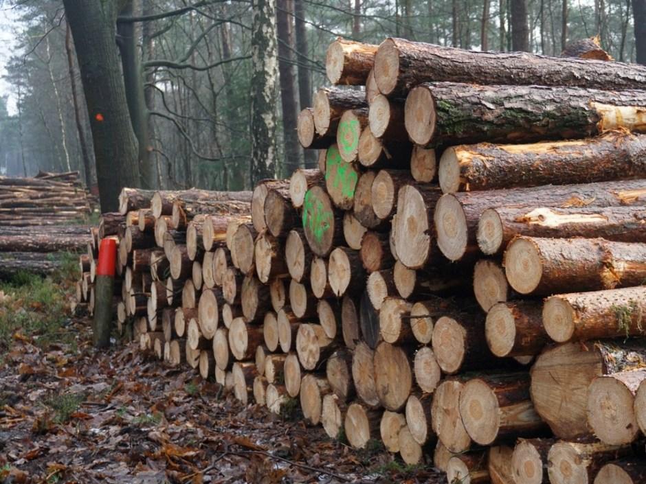 De houtoogst, heerlijk die geur!