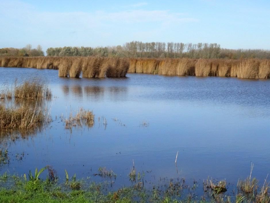 Rietkraag vogelroute lauwersmeer