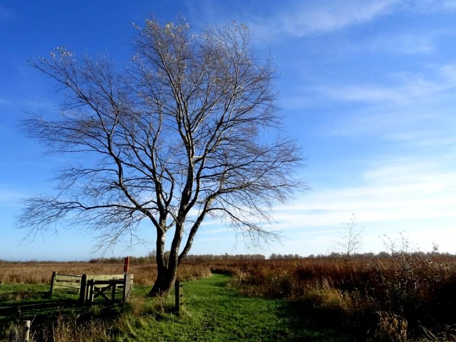 rietvelden vogelpad lauwersmeer