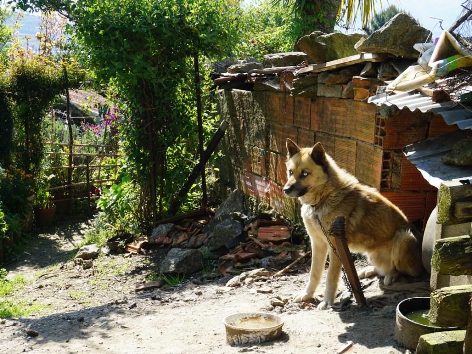 Hond - Quinta das Corujeiras
