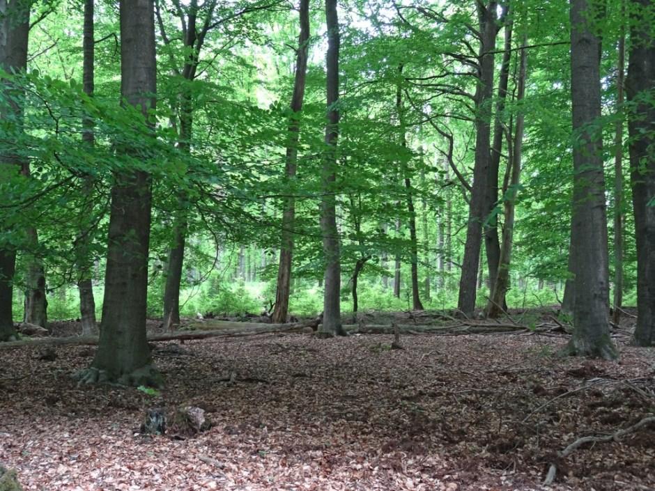Bossen bieden in de zomer schaduw tijdens een wandeling