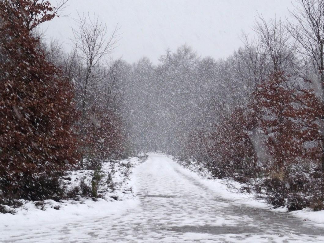 dikke sneeuwvlokken vallen naar beneden