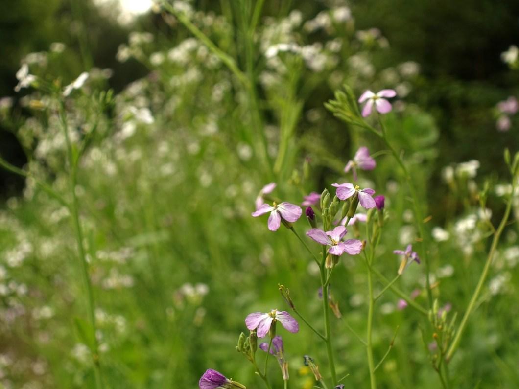 Bloemen langs Schutpad Klompenpad