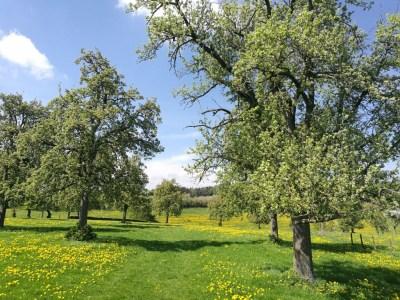 Boomgaard wandelen rondom zuid limburg