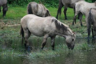 Paarden stille kern
