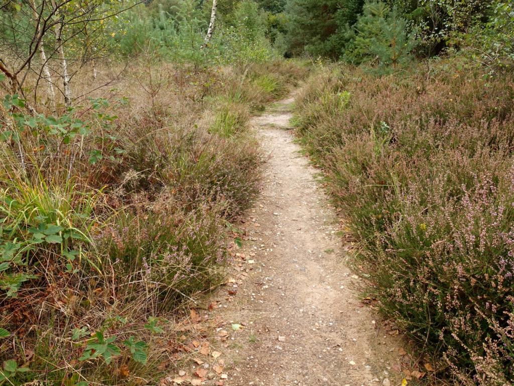 16 Smal pad wandelen Amerongen