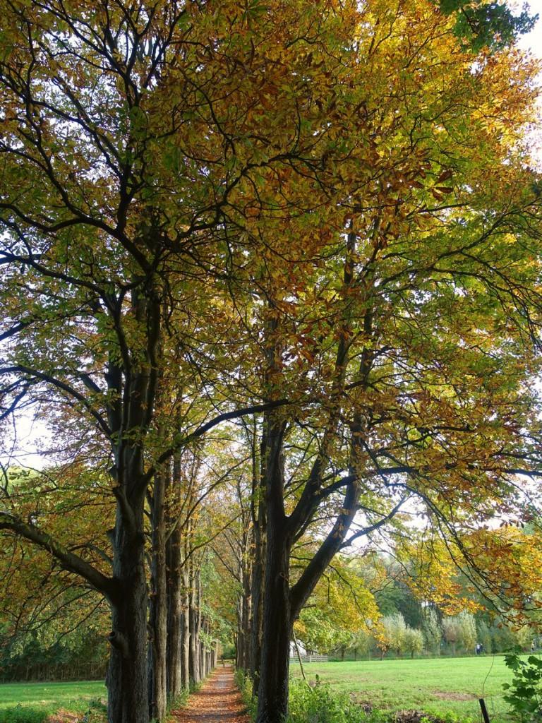 herfst slot suylen
