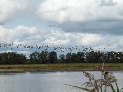 Vogelplas bij Willeskop