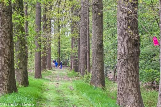 2018-04-26 Torhout-60