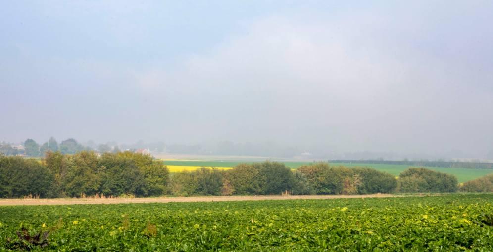 Rosmeer 076
