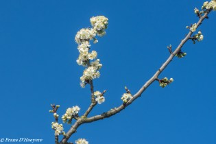 2019-03-30 Roosdaal-32